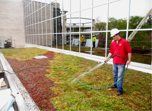 Regular Maintenance keeps your Green Roof good looking