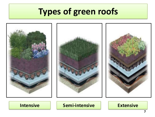 Extensive Green Roofs are Thinner than Intensive Green Roofs